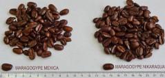 Кофе в зернах СВЕЖЕЙ ОБЖАРКИ Esperanto MARAGOGYPE MEXICA (Эсперанто Марагоджип Мексика), моносорт, 0,5 кг, вакуумная упаковка